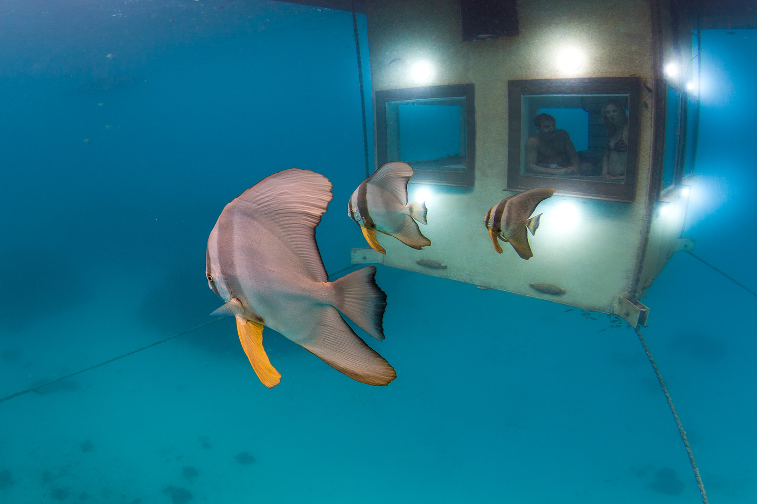 real underwater world.  World The Manta Underwater Room Jesper Anhede To Real World