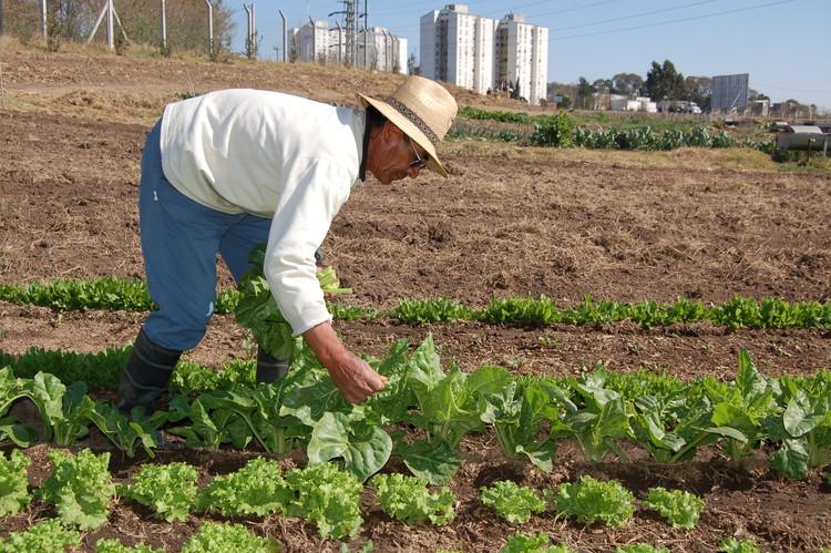 Agricultura Urbana en Latinoamérica: ¿Una opción real de alimentación para nuestras ciudades?, © Vía Revista Soberanía Alimentaria, Biodiversidad y Cultura