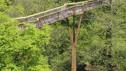 Passarela na Copa das Árvores de Kew  & Rhizotron  / Marks Barfield Architects