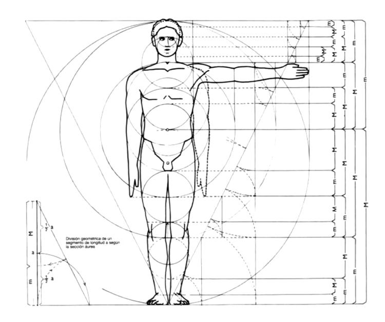 En detalle el ser humano como medida de la arquitectura for Medidas ergonomicas del cuerpo humano