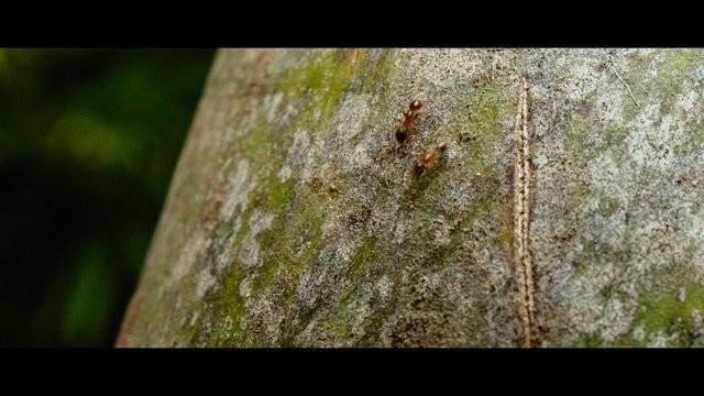 Vídeo: Textures and Ants / Pedro Kok e Gabriel Kogan – Bienal de Veneza 2014