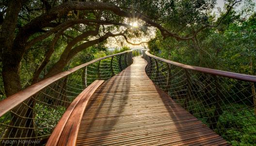 Em imagens: uma impressionante passarela elevada na África do Sul, © Adam Harrower