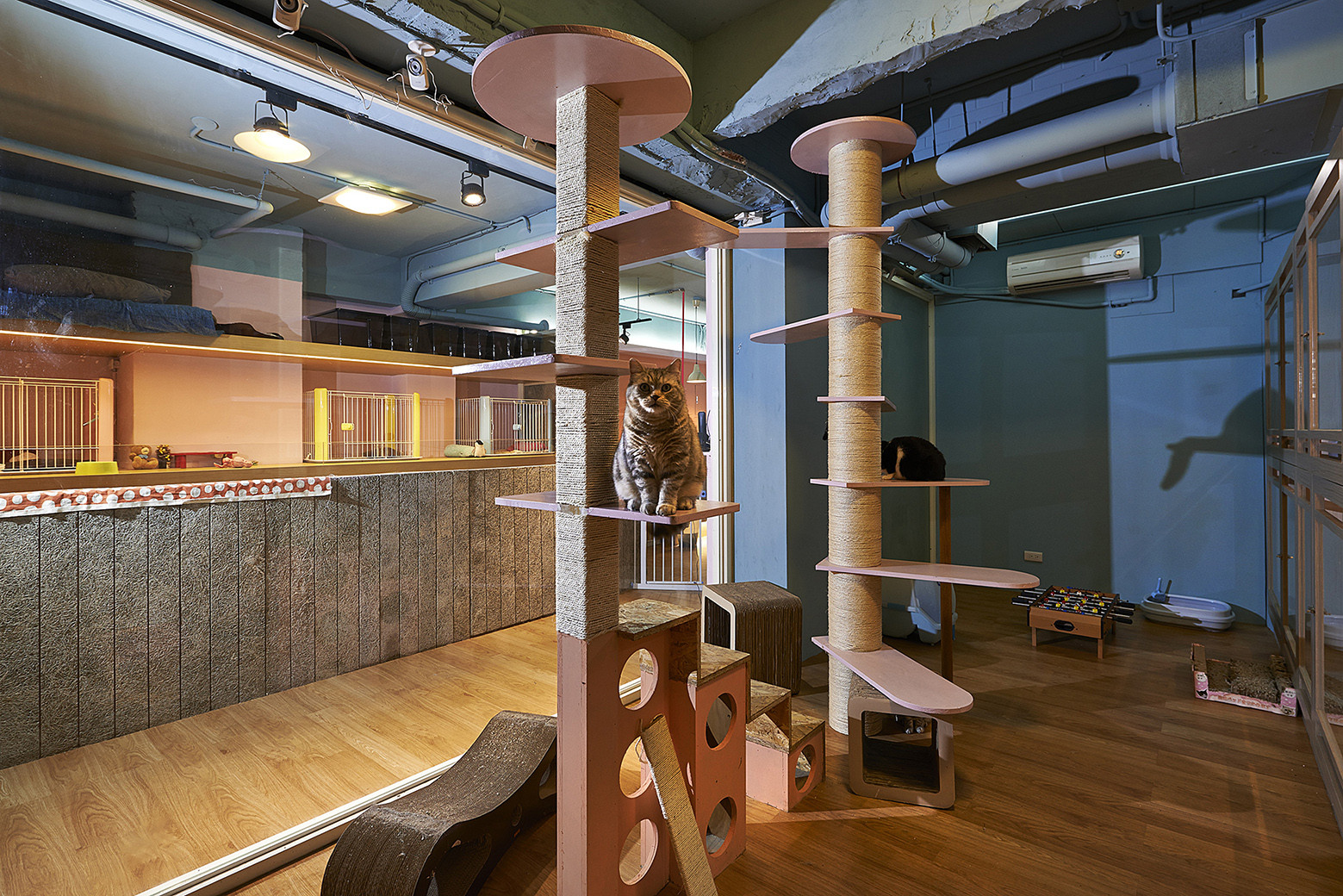 Petaholic Hotel    Sms Design