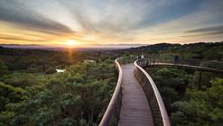 Pasarela entre las copas de los árboles Kirstenbosch Centenary / Mark Thomas Architects