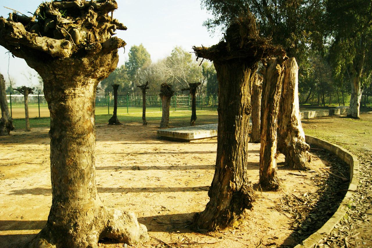 Asociación de Árboles Invertidos, Viejos Cracks: un espacio para el encuentro y el fútbol , © Felipe Saravia Arias