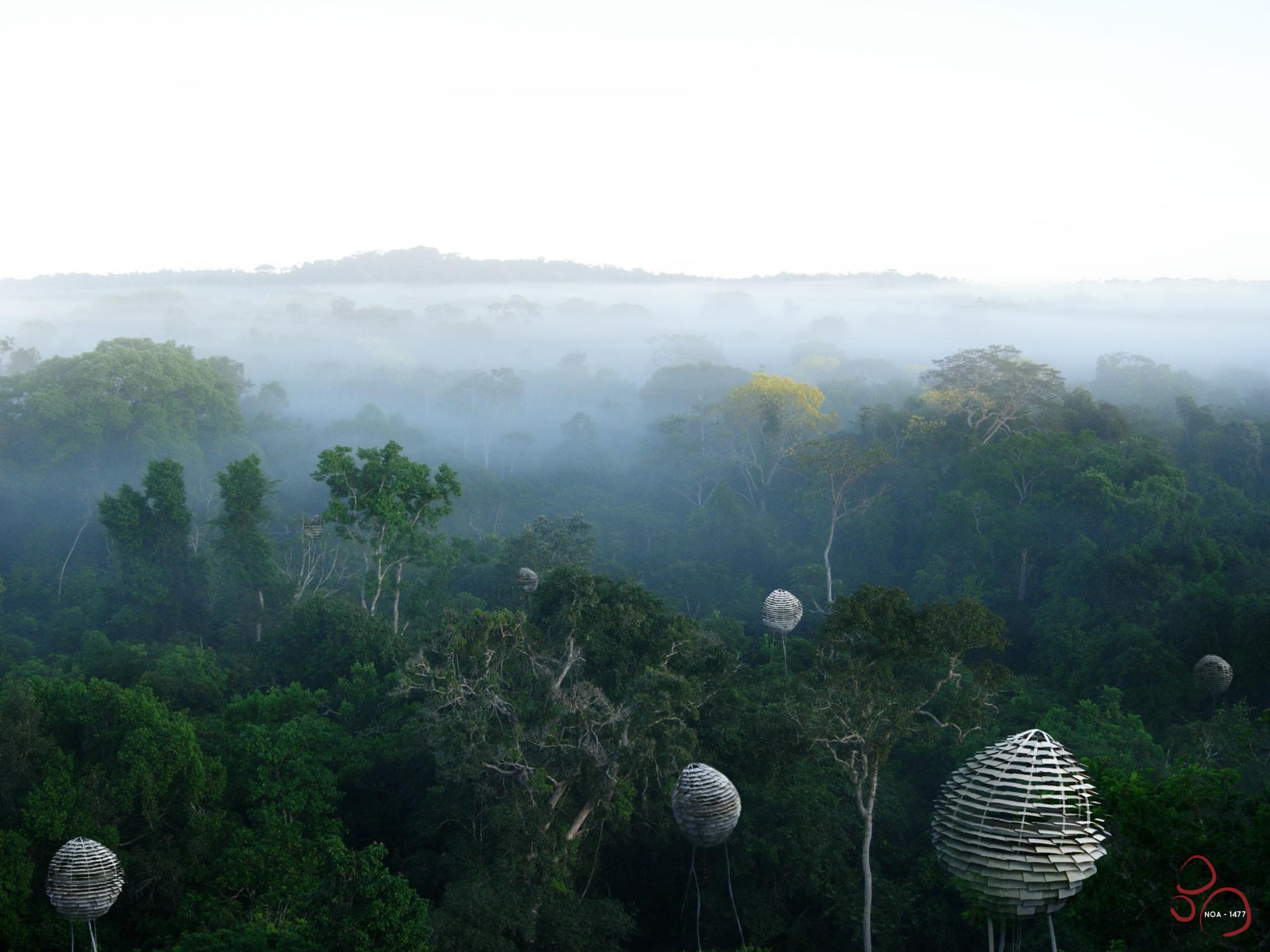 Segundo Lugar en Concurso de Ideas Nature Observatory of Amazonia (NOA) / Brasil , Cortesia de Equipo Segundo Lugar
