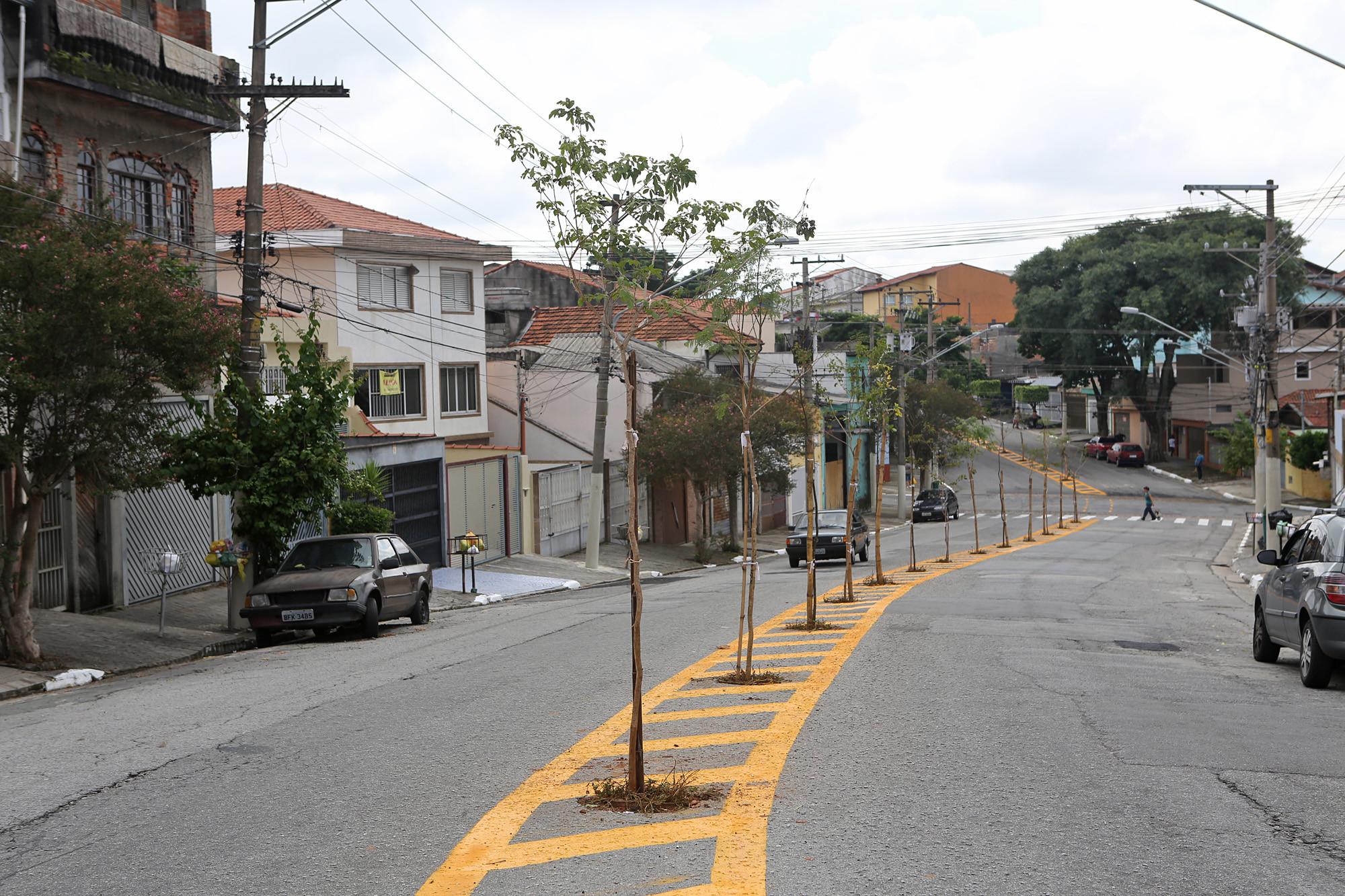 cb159b077a1 Prefeitura de São Paulo testa novas alternativas para o plantio de árvores  no ambiente urbano