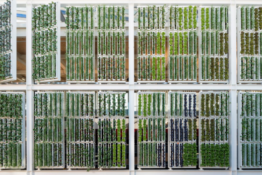 The USA Pavilion's 7,200-square-foot vertical farm. Image © Saverio Lombardi Vallauri