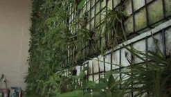 Video: The Green Wall at The Green Building / (fer) studio