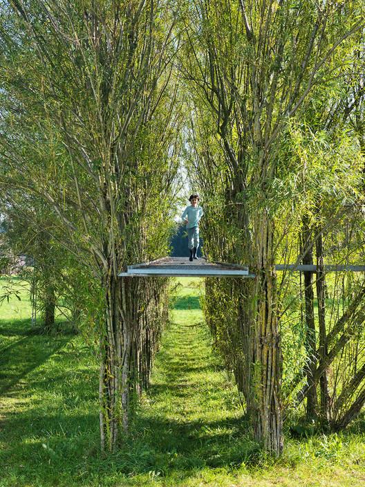Baubotanik: Um sistema construtivo inspirado na botânica que cria estruturas vivas, Ponte de salgueiro no verão de 2012. Imagem © Ferdinand Ludwig