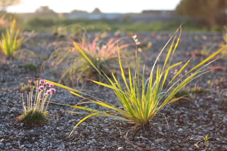 Materiales: Cubiertas Vegetales e Impermeabilización, Casa en Punta de Lobos. Image Cortesía de Tecpro