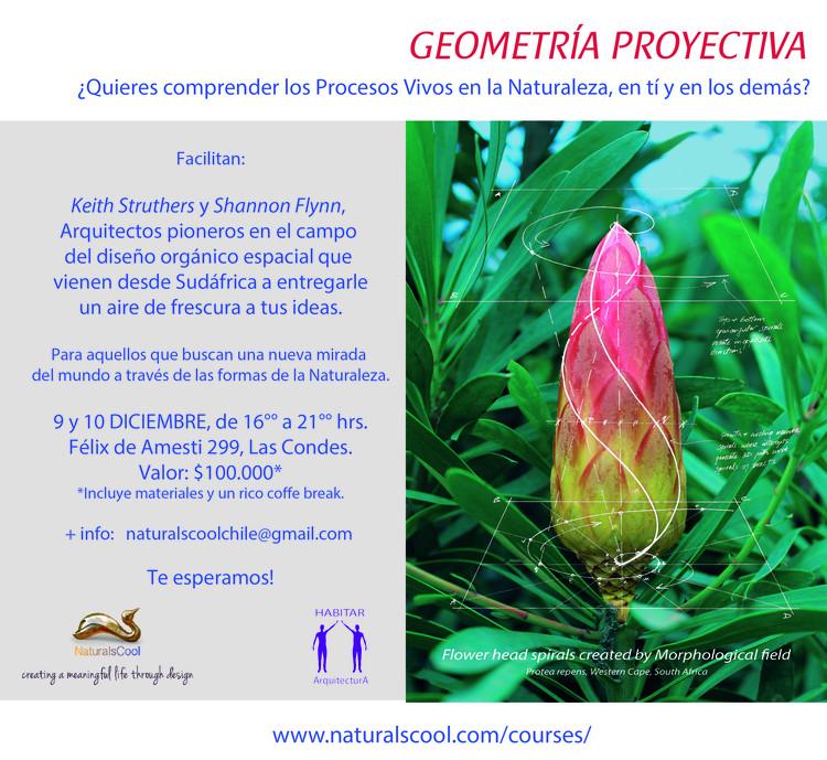 Curso: Geometría Proyectiva, Planta Protea Repens con estudio de aplicación a la Geometría Proyectiva desarrollada por Keith Struthers.