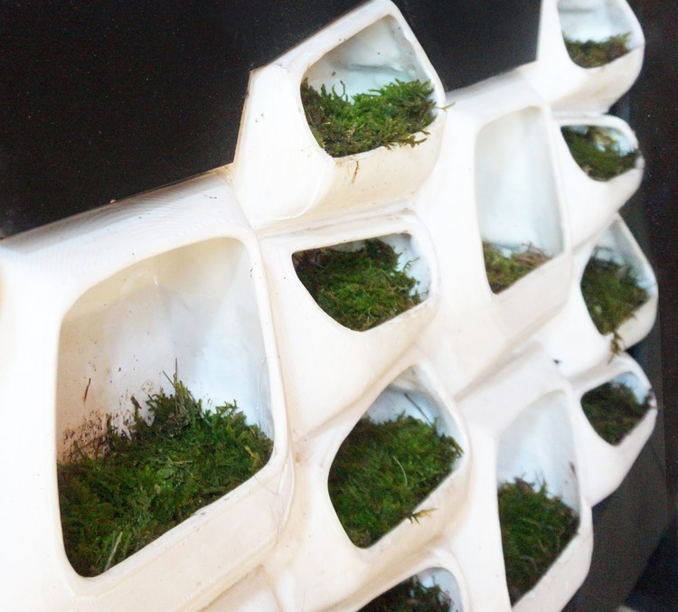 Sistema modular de muros verdes genera electricidad a partir del musgo, © Elena Mitrofanova