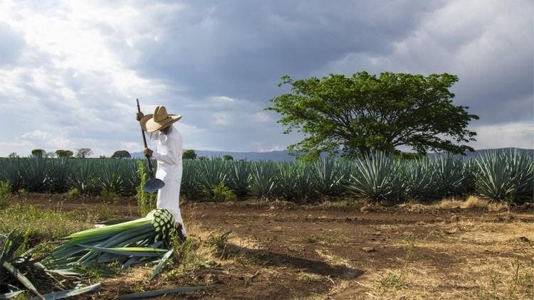 Empresa mexicana crea nuevo material de cimbra a base de agave y desechos plásticos, vía TEOREMA