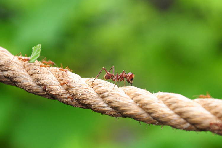 Aprenda com as formigas a planejar cidades para pessoas, © Martin Pettitt, via Flickr. Licença CC BY 2.0
