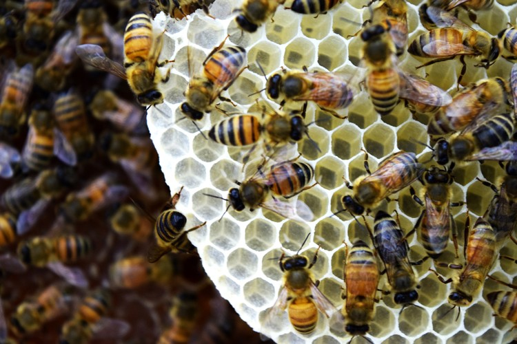Neri Oxman + Mediated Matter criam apiário sintético para combater mortes em colônias de abelhas, Construção de colmeia dentro do ambiente de Apiário Sintético. Imagem © The Mediated Matter Group