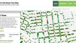 Nueva York mapea todos sus árboles y calcula el beneficio económico de cada uno