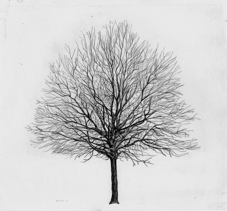 """Exhibition Examining Cesare Leonardi To Open in Genoa, Cesare Leonardi, Franca Stagi, """"11.3.1 Carpinus Betulus,"""" 1978–1982"""