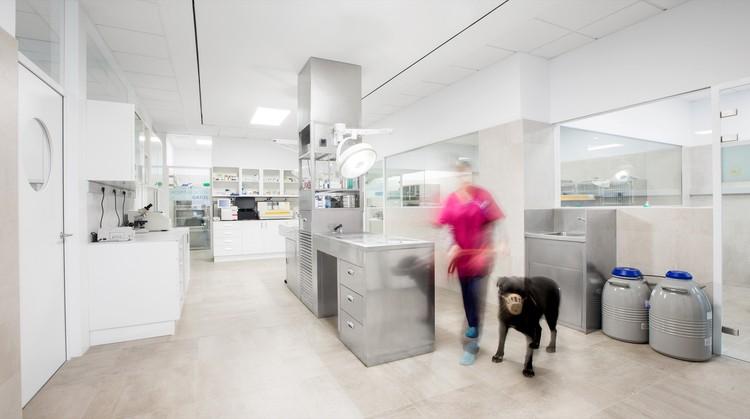 Hospital Veterinario Constitución / Dobleese Space & Branding, © Adolfo López