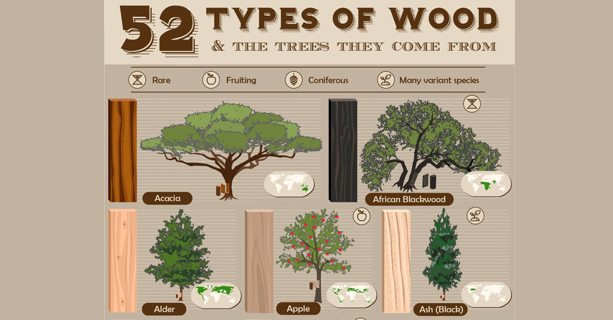 52 types of wood and the trees they come from archdaily for Types of woodworking