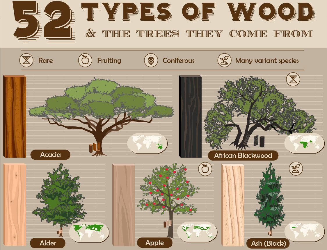 52 Types Of Wood And The Trees They Come From Archdaily