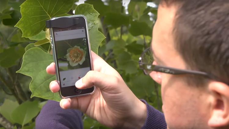 "Pl@ntNet: The ""Shazam"" of Plants Making Life Easier for Landscape Designers, Courtesy of: Pl@ntNet"