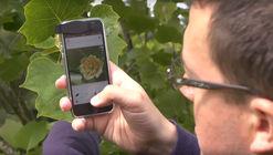 """PlantNet: el """"Shazam"""" de las plantas que hará la vida de los paisajistas más fácil"""