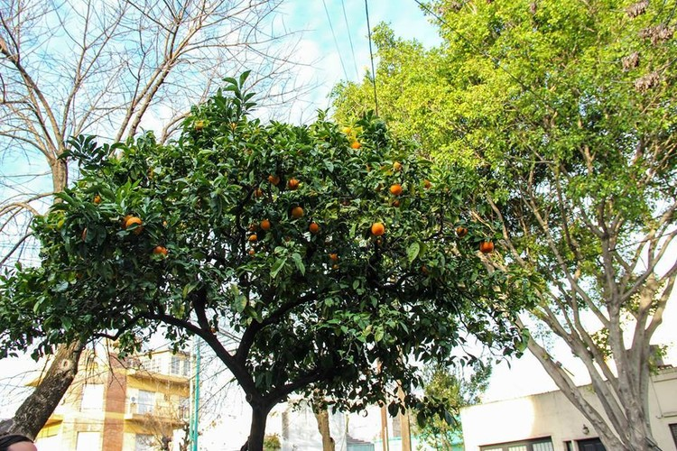 ¿Sabes dónde se encuentran los árboles frutales en Buenos Aires?, vía La ciudad nos regala sabores