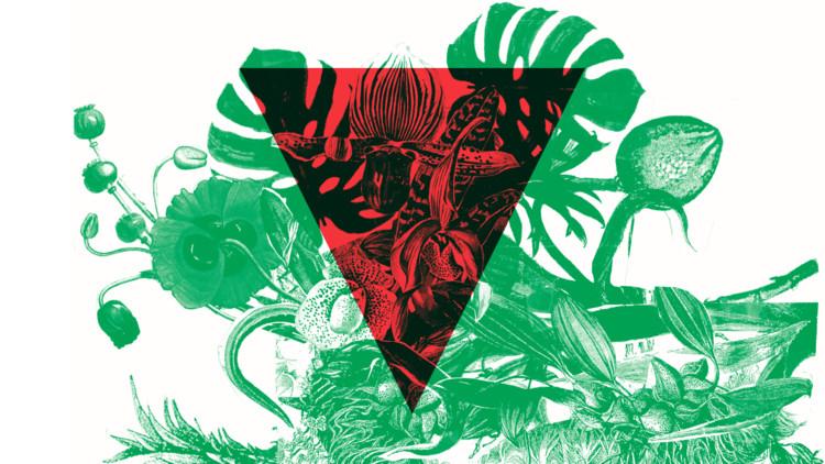 Lançamento Contravento 7.2 - Labirinto Verde, Contravento