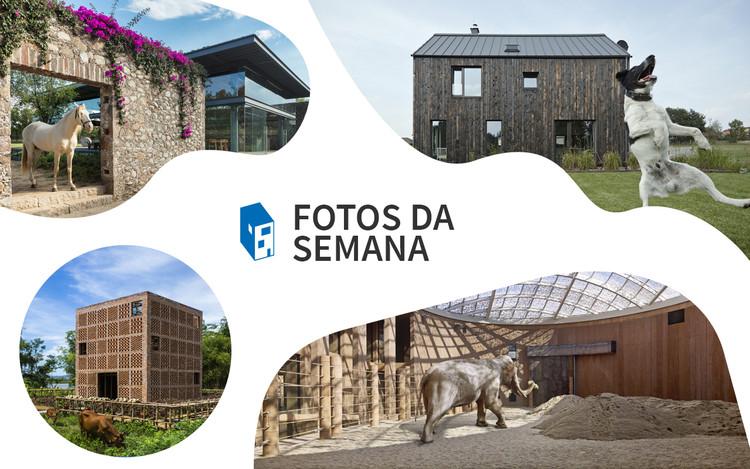 Fotos da Semana: 20 imagens de arquitetura e animais