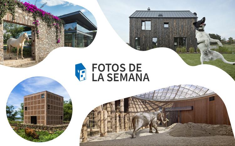 Fotos de la Semana: 20 increíbles imágenes de arquitectura y animales