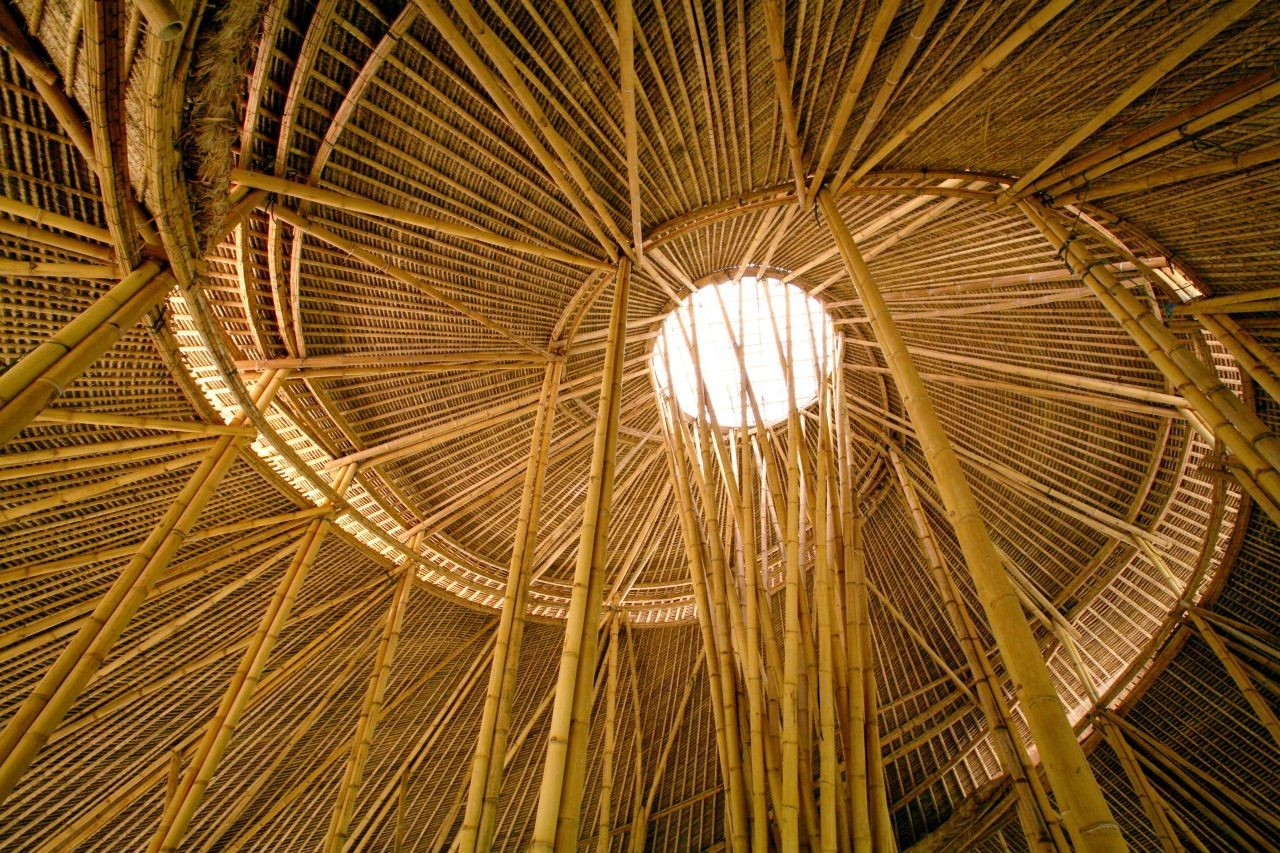 Fotos de la Semana: La belleza del Bambú