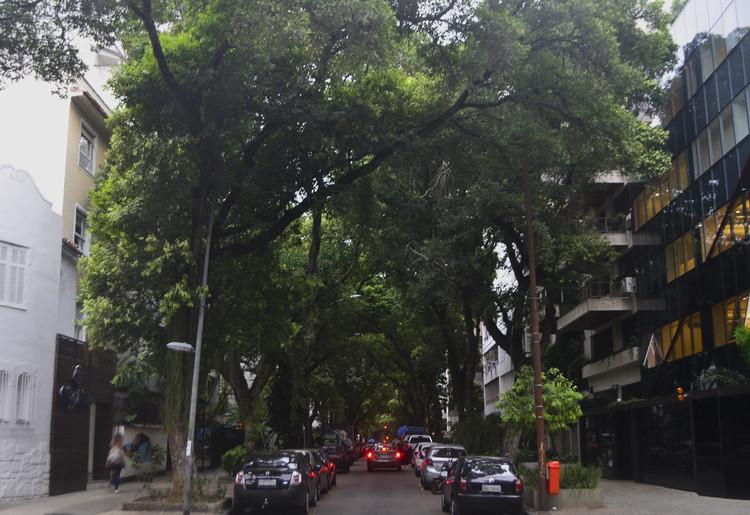 A arborização do bairro de Ipanema e a criação de identidades paisagísticas, Oitis (Licania tomentosa) na Rua Nascimento Silva. Image © Gabriel Pedrotti