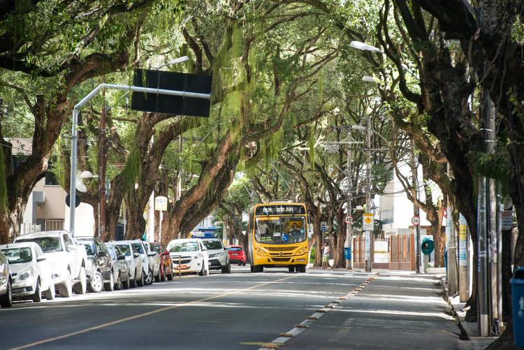 Manual técnico de arborização urbana com espécies da mata atlântica é lançado em Salvador, Cortesia de ssamataatlantica.com