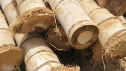 ¿Podrá alguna vez el Bambú masificar su uso dentro de la industria de la construcción?