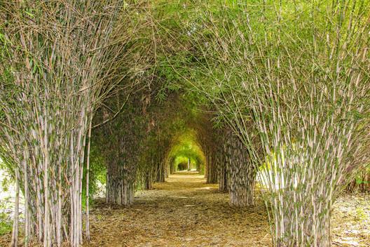 El tunel del amor Paraíso del bambú y la guadua. Montenegro, Quindío, Colombia. Image © Rosalba Tarazona [Flickr], bajo licencia CC BY-SA 2.0
