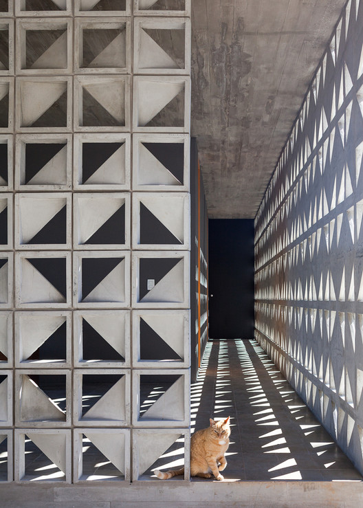 Cats in the Right Place at the Wrong Time in Architectural Photography