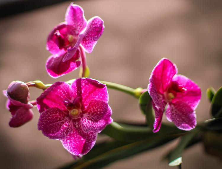 Colombia tendrá nuevo herbario para la protección de orquídeas , Orquidea, flor nacional de Colombia. Image © Rosalba Tarazona [Flickr], bajo licencia CC BY-SA 2.0