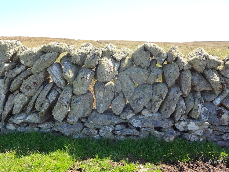 © <a href='https://en.wikipedia.org/wiki/File:Galloway_Dyke_on_Fetlar.jpg'>RobertSimons</a> licensed under <a href='https://creativecommons.org/licenses/by-sa/3.0/deed.en'>CC BY-SA 3.0</a>