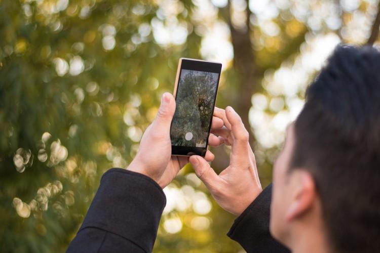 Maringá desenvolve aplicativo para moradores cadastrarem árvores, Cortesia de CicloVivo