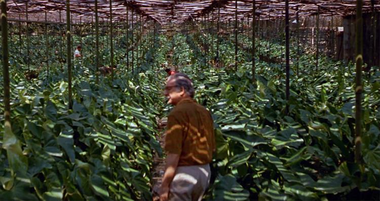 """'Filme Paisagem' recorre la historia de Roberto Burle Marx, uno de los más grandes paisajistas del siglo XX, Escenas de """"Filme Paisagem, um olhar sobre Roberto Burle Marx""""."""