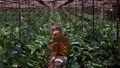 'Filme Paisagem' recorre la historia de Roberto Burle Marx, uno de los más grandes paisajistas del siglo XX