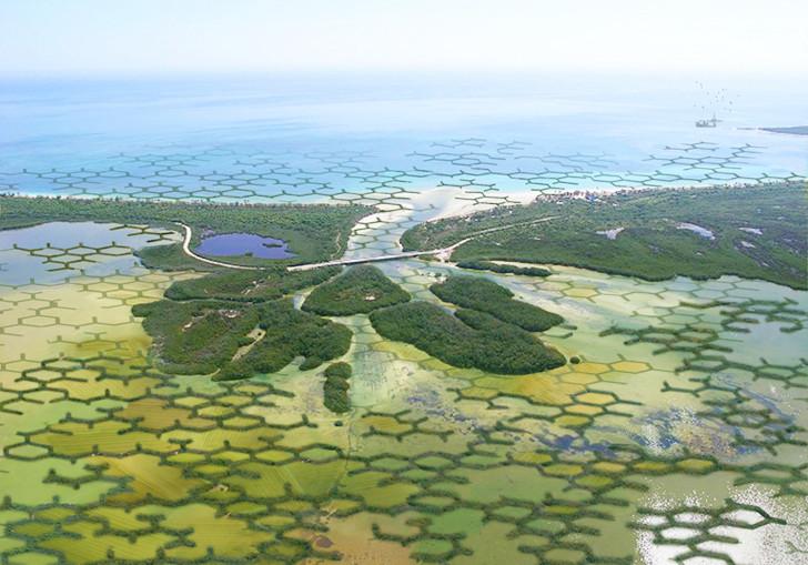 """""""CALTROPÉ"""" - florestas de mangue modulares podem ajudar a reduzir a perda de terras agrícolas devido ao aumento do nível do mar e à erosão."""