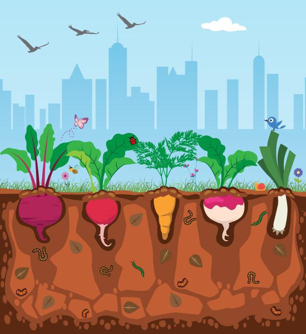 Manual gratuito de hortas urbanas é disponibilizado pelo Instituto Pólis, Cortesia de Instituto Pólis