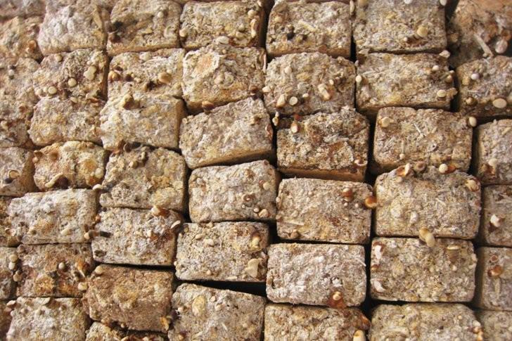 Pesquisador desenvolve tijolo de cogumelos mais resistente que concreto, O tijolo 100% orgânico é resistente ao fogo, água e mofo. Cortesia de CicloVivo