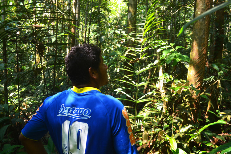 Rừng nhiệt đới Amazon © Victor Delaqua