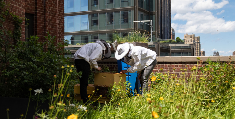 How Can Cities Help and Be Helped by Bees, Cortesia de COOKFOX