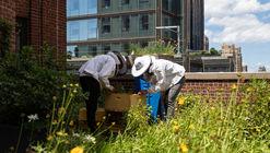 Cómo las abejas pueden mejorar nuestras ciudades (y beneficiarse de ellas)
