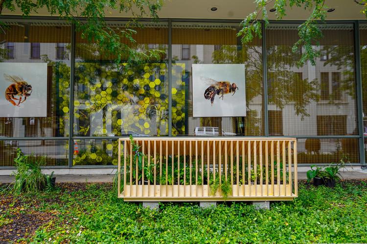 Alberto Kalach, Rozana Montiel, Tatiana Bilbao y Manuel Cervantes desarrollan proyecto para la conservación de las abejas con Pienza Sostenible, © Manuel Cervantes