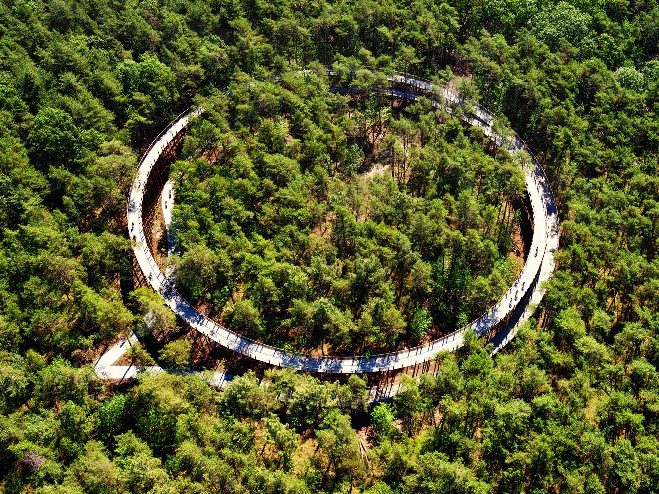 Cycling through the Trees / Burolandschap
